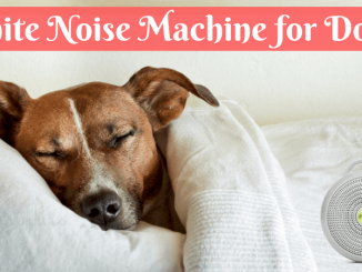 White Noise Machine for Dogs